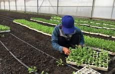 Gian nan tìm đất làm nông nghiệp 'sạch'