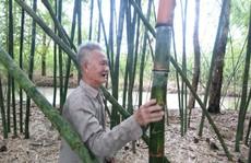 """Lão nông 83 tuổi tăng thu nhập nhờ """"níu kéo"""" lũy tre làng"""