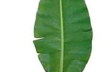 Người Việt phải trả 500.000 đồng mỗi chiếc lá chuối ở Nhật