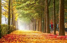 Mùa thu tại hòn đảo trong phim 'Bản tình ca mùa đông'