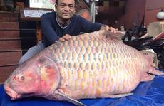 Đại gia 'săn' cá hô từ Campuchia, Lào, Thái...