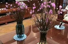 'Hoa đỗ quyên ngủ đông' cũng có độc tố