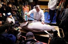 Chợ cá lớn nhất thế giới ở Nhật Bản - nơi bán những con cá triệu USD