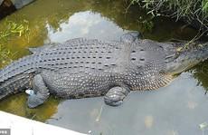 Cá sấu nhảy lên tường cao 2,5 m, giết chết nhà khoa học nữ