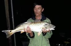 Câu được 'cá lạ' vàng óng nghi là cá sủ vàng quý hiếm