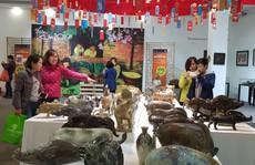 Ngắm 2.000 con 'lợn sung túc' tại Bảo tàng Phụ nữ Việt Nam