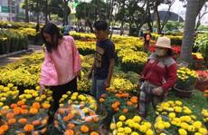 Hoa kiểng Tết ồ ạt về TP HCM