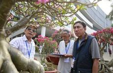 Cuộc thi 'Hoa Cảnh' - Tôn vinh nét đẹp đặc sắc của các loài hoa kiểng Việt Nam