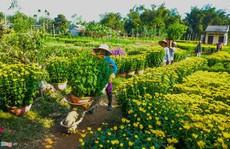 Ngắm làng hoa Tết lớn nhất miền Trung