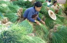 Dân 'khóc thét' vì hành lá ở Phú Quốc 150.000 đồng/kg