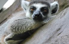 Clip: Những khoảnh khắc 'cưng muốn xỉu' ở  vườn thú Safari Phú Quốc