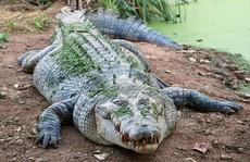 Bé gái nhảy lên lưng, chọc mắt cá sấu cứu bạn