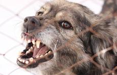 Dùng biện pháp dân gian lấy 'nọc' chó dại, bé 5 tuổi chết oan