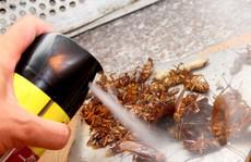 'Trảm' cơ sở bán thuốc diệt côn trùng chung với thực phẩm