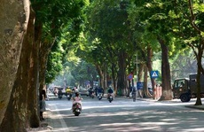 Những con đường rất xanh