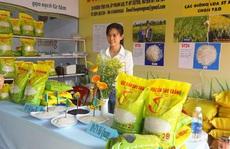 Gạo Việt 'ngon nhất thế giới' có gì đặc biệt, mua ở đâu?