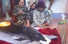 """Bắt được cá voi, ngư dân tưởng """"trúng cá lạ"""" nên mang ra chợ bán"""