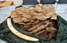 Hơn 24 kg nghi ngà voi, trầm hương từ Thái Lan bị 'vịn' ở sân bay