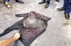 Xác minh bất ngờ vụ câu trộm rùa nặng hơn 10 kg nổi ở hồ Gươm