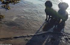 Đào xương, 2 chú chó... khai quật được 'quái vật biển' 65 triệu tuổi