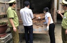 Giá thịt heo tăng 'sốc', địa phương nói không xuất lậu heo sang Trung Quốc