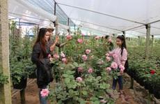 Chấn chỉnh vụ dựng hàng rào thu phí gây phản cảm ở làng hoa Sa Đéc