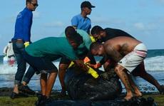 """4.400 km bờ biển Brazil chết tức tưởi vì """"thủy triều đen"""" bí ẩn"""