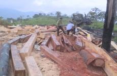 Khởi tố 10 đối tượng mở 'công trường' khai thác gỗ lậu ở 2 tỉnh Đắk Lắk - Khánh Hòa
