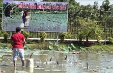 Mãn nhãn với cánh đồng hoa hồng có biểu diễn cá lóc bay