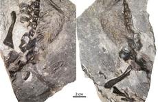 Bí ẩn 2 'quái vật' 309 triệu tuổi quấn lấy nhau mà hóa đá