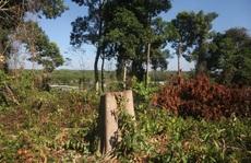 Đồng Nai vào cuộc làm rõ một vụ 'phá rừng' trong khu bảo tồn
