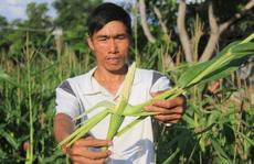 Hộ nghèo thêm khó khăn sau khi... nhận hỗ trợ: Giao doanh nghiệp độc quyền cung ứng