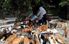 Bà nội trợ xây mái ấm cho 250 con mèo bị bỏ rơi