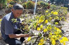 Nông sản rớt giá, các nhà vườn giảm giá bán 'chạy' hoa kiểng