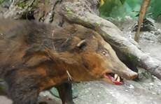 Ngộ nghĩnh bộ sưu tập các loài muông thú ở bảo tàng Đồng Nai