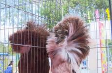Ngắm những chú chim bồ câu giá trăm triệu 'khoe dáng'