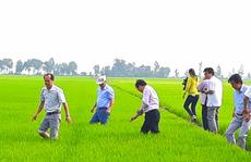Đầu năm, lãnh đạo tỉnh An Giang lội ruộng thăm đồng cùng nông dân