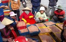 Ngư dân Bình Định kiếm tiền triệu sau vài giờ ra khơi nhờ trúng ruốc biển