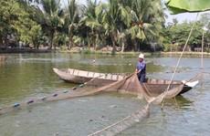 Người nuôi cá tra không nên 'ngủ quên trên chiến thắng'!