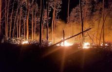 Bất cẩn khi đốt rẫy làm thiêu rụi 5 ha rừng