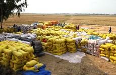 Ngân hàng cam kết đủ vốn cho vay ngành lúa gạo, lãi suất 6%/năm