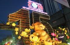 Heo vàng khổng lồ rực rỡ đường hoa xuân Cần Thơ 2019