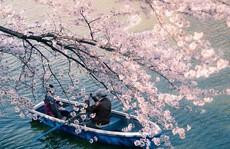 10 bức ảnh khiến bạn muốn đi ngắm hoa anh đào ngay lập tức