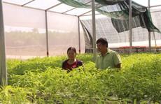 """Đầu năm, thăm trang trại rau sạch ở """"đảo ngọc"""" Phú Quốc"""
