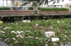 Cần 'bàn tay sắt' và sự đồng lòng để dẹp nạn xả rác