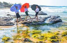 'Bãi rêu cổ tích' hút du khách khám phá trầm tích núi lửa Quảng Ngãi
