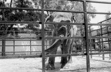 'Con voi buồn nhất thế giới' qua đời sau 43 năm bị nhốt
