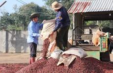 Nâng cao giá trị cà phê Việt
