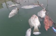 Đà Nẵng: Gần 2 km kênh đổi màu bất thường, kèm hiện tượng cá chết