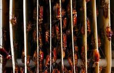 Mục sở thị trang trại nuôi hàng triệu con gián làm mồi nhậu